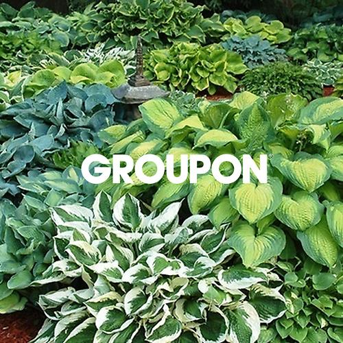 30% Off Groupon Promo Codes & Coupons 2018 + 7% Cash Back